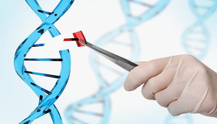 Genome editing by CRISPR technique