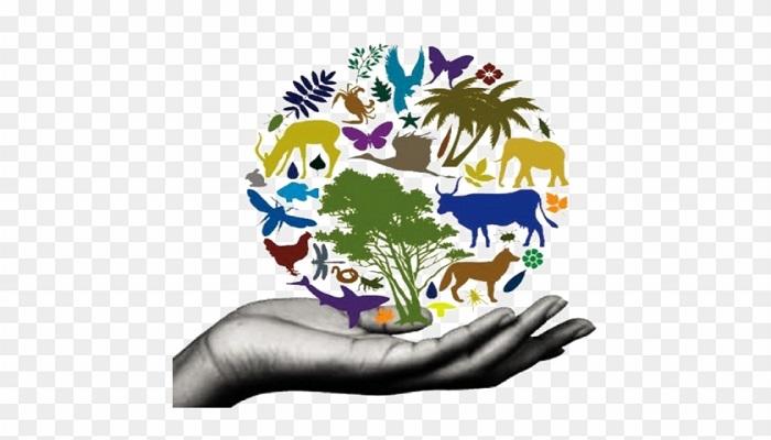 biodiversity conservation techniques