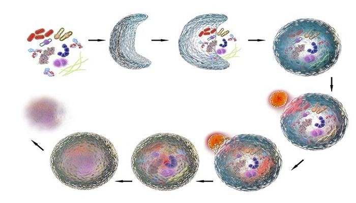 Significance of autophagy