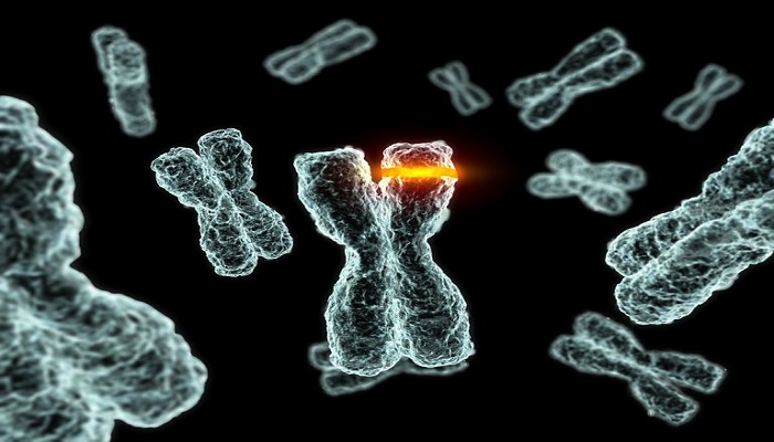 What Are the Four Types of Chromosomal Mutations ...