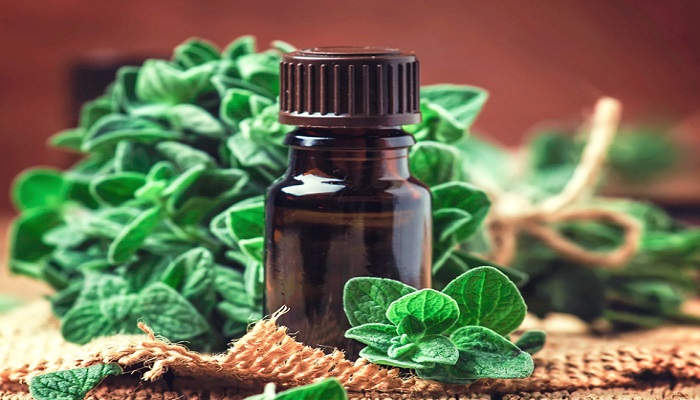 Health benefits of oregano oil