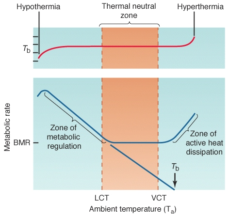 Thermal neutral zone