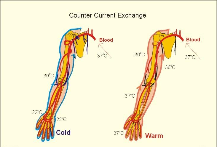 counter current heat exchange mechanism