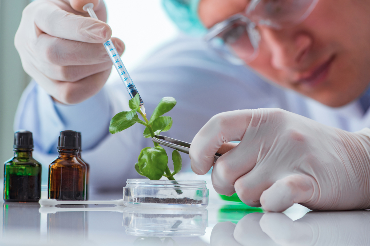 Plant biotechnology for improving crop yield
