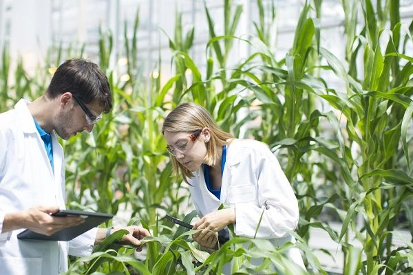 Research areas in plant biotechnology