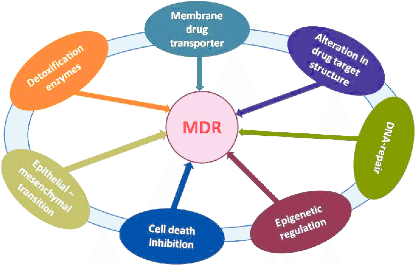 mechanism of multidrug resistance in microbes