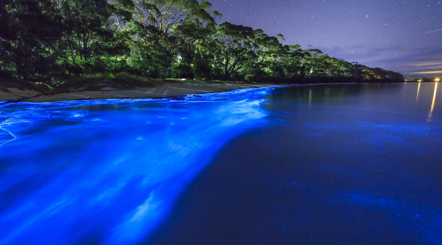 maxican beaches and bioluminiscence